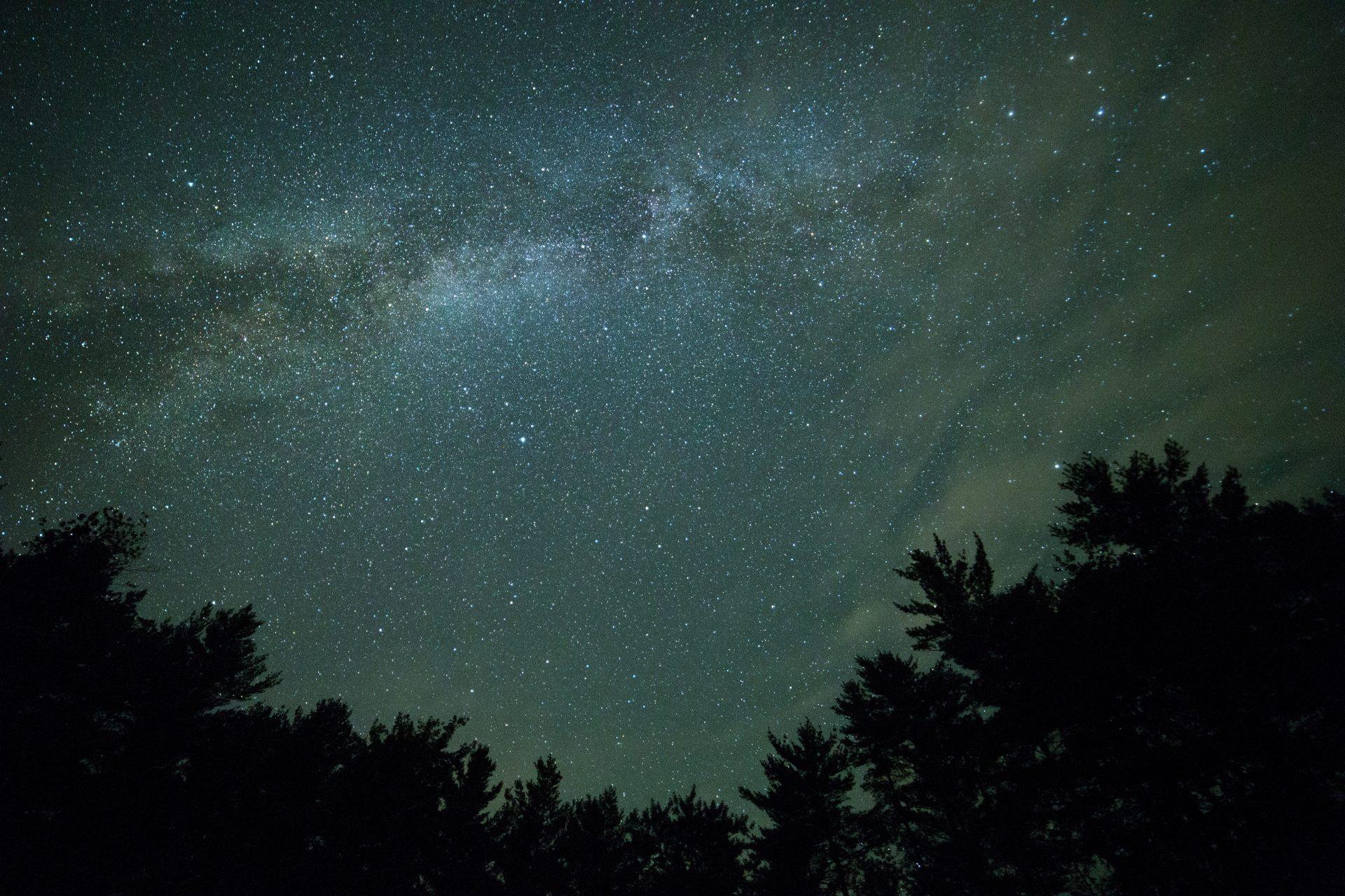 Stjernekig i lergraven
