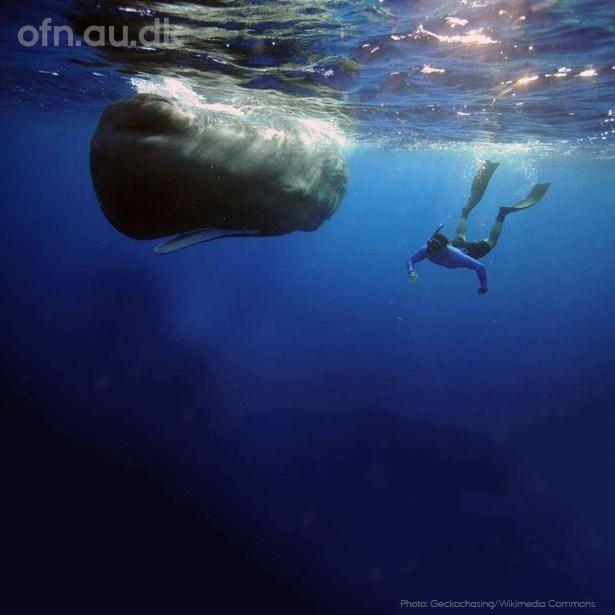 AFLYST – Dybhavet- nyt fra en ukendt verden