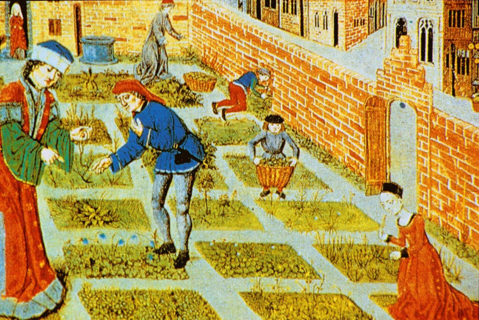 AFLYST – Foredrag – Planternes brug i renæssancen