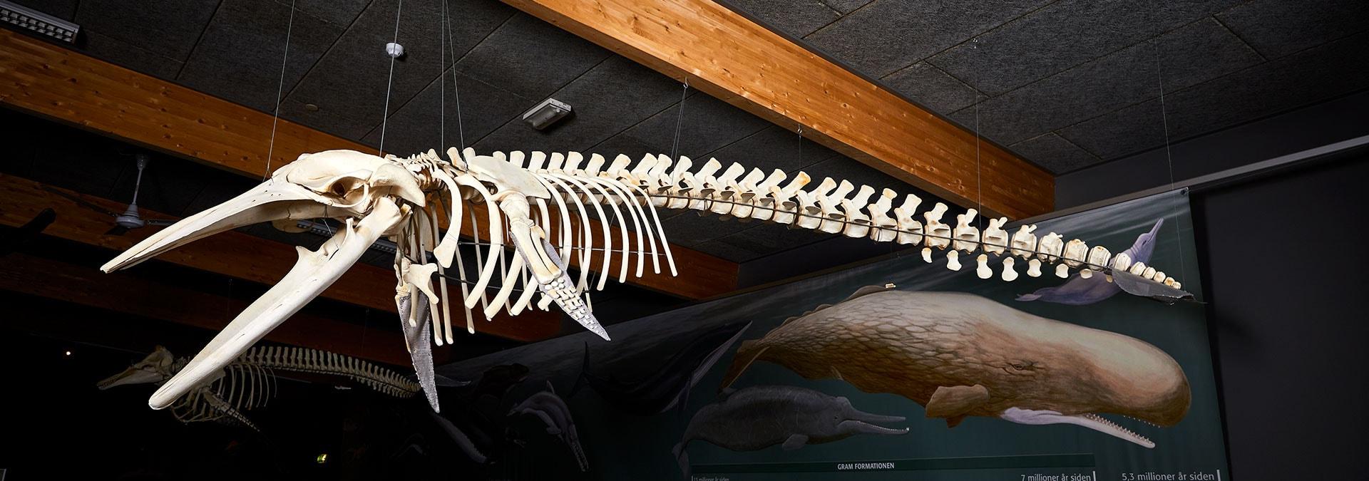 [AFLYST] FORSKNINGENS DØGN: Mød palæontologen